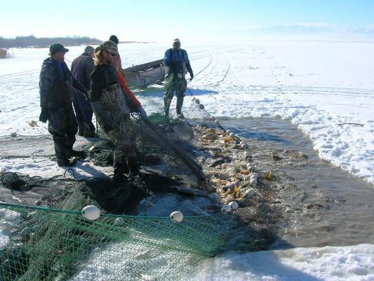Carp-ice-fishing