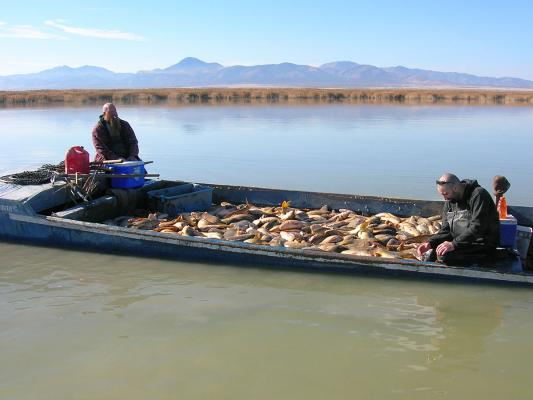 Carp-removal-boat