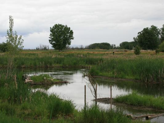 habitat-wetlands